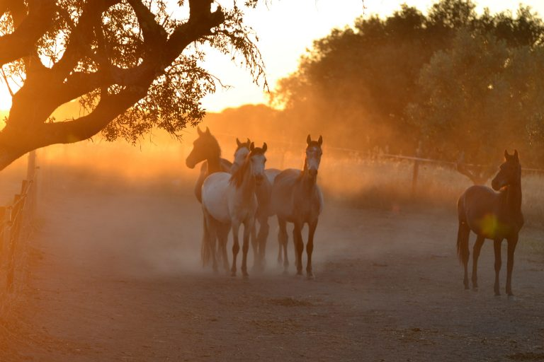 Horses standing in a misty sunset